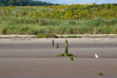 Praia e dunas Fotos de Stock Royalty Free