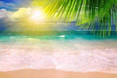 Praia e folha de palmeira ideais das caraíbas. Fotografia de Stock Royalty Free