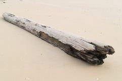 Praia e log Fotografia de Stock