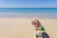 Praia e mar longos do cão do cabelo imagem de stock