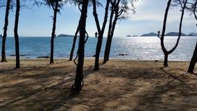 Praia e mar-scape do pinho Fotografia de Stock Royalty Free