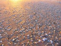 Praia e os escudos Imagem de Stock Royalty Free