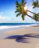 Praia e palma ideais das caraíbas Fotos de Stock