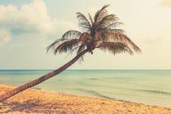 Praia e palmeira com fundo do oceano Imagem de Stock