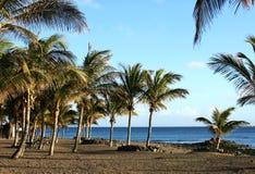 Praia e palmeiras Imagem de Stock Royalty Free