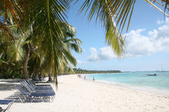 Praia e palmeiras tropicais da areia Imagem de Stock Royalty Free