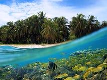 Praia e peixes Fotos de Stock Royalty Free
