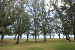Praia e pinheiros Foto de Stock Royalty Free