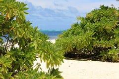 Praia e plantas Fotos de Stock