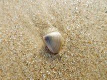 Praia e shell do mar Foto de Stock
