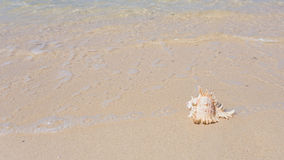 Praia e shell do mar imagem de stock royalty free