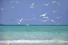 A praia em Maldivas Fotografia de Stock
