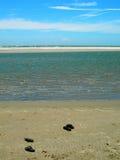 Praia em South Carolina América imagem de stock
