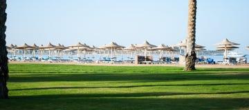 Praia ensolarada em Egito com guarda-chuvas e grama verde Sombras escuras na grama verde próximo da praia da areia imagem de stock