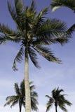 Praia FL de Hollywood Palma três Fotografia de Stock