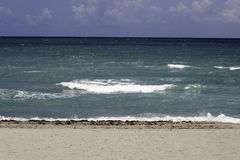 Praia FL de Hollywood Palma três Imagem de Stock Royalty Free