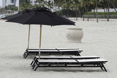 Praia FL de Hollywood Palma três Imagens de Stock