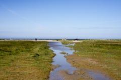Praia grande gramínea Imagem de Stock