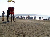 Praia Gujarat do mar de Somnath, Índia Fotografia de Stock Royalty Free