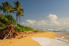 Praia Havaí foto de stock royalty free