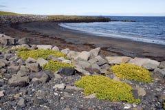 Praia islandêsa imagens de stock