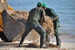A praia limpa Imagens de Stock Royalty Free