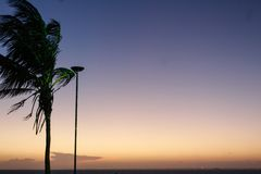 Palm tree at dusk stock photos