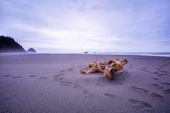 Praia litoral da madeira lançada à costa de Oregon no nascer do sol foto de stock