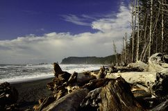 Praia litoral noroeste pacífica   Foto de Stock Royalty Free