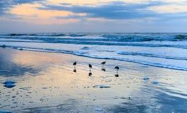 Praia litoral South Carolina do insensatez do fundo foto de stock royalty free