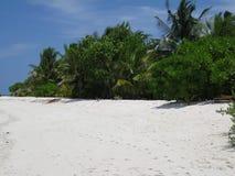 Praia maldiva com palmeiras Fotografia de Stock Royalty Free