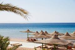 Praia, Mar Vermelho, guarda-chuvas, salas de estar do chaise, ramos da palma de data fotografia de stock