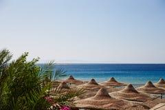 Praia, Mar Vermelho, guarda-chuvas, salas de estar do chaise, ramos da palma de data foto de stock