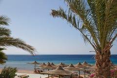 Praia, Mar Vermelho, guarda-chuvas, salas de estar do chaise, ramos das palmas de data, África, tropical imagem de stock