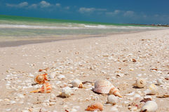 Praia mexicana Foto de Stock Royalty Free