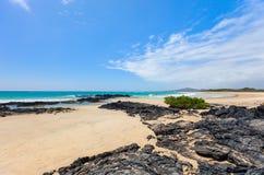 Praia na ilha de Galápagos Isabela, Equador fotos de stock royalty free