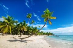 Praia na ilha de Saona nas Caraíbas Fotos de Stock