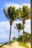 Praia na ilha tropical Água azul, areia e palmeiras claras Ponto de férias bonito, tratamento e aquatics dominican imagens de stock royalty free
