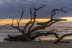 Praia no alvorecer - ilha da madeira lançada à costa de Jekyll, Geórgia fotos de stock royalty free