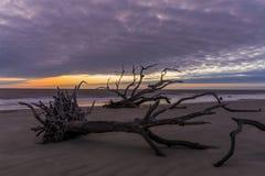 Praia no alvorecer - ilha da madeira lançada à costa de Jekyll, Geórgia imagens de stock