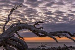 Praia no alvorecer - ilha da madeira lançada à costa de Jekyll, Geórgia fotos de stock