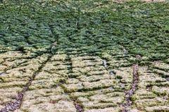 Praia no detalhe de Etretat- Fotos de Stock Royalty Free