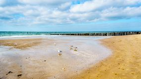 Praia no Mar do Norte e Westerschelde perto da cidade do porto de Vlissingen imagens de stock royalty free