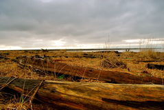Praia noroeste pacífica Foto de Stock Royalty Free