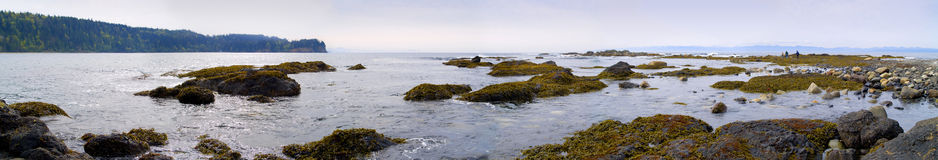 Praia noroeste pacífica panorâmico Imagens de Stock Royalty Free