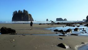Praia pacífica da costa/oceano Imagens de Stock