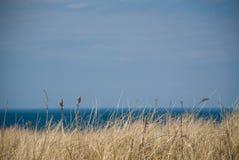 Praia pelo oceano Foto de Stock