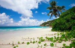 Praia perfeita em Seychelles fotografia de stock royalty free