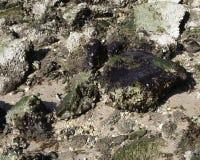 Praia poluída petróleo fotos de stock
