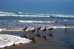 Praia preta Fotos de Stock Royalty Free